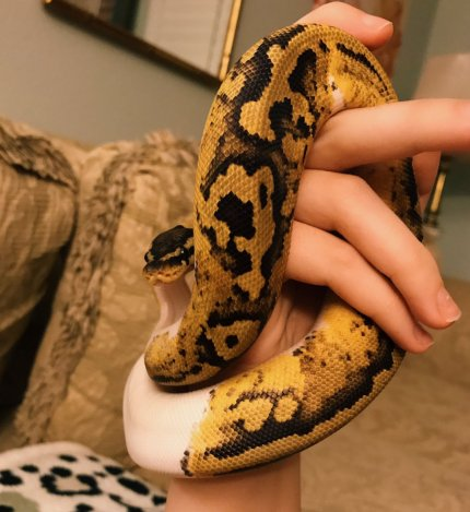 taylor nicole dean snake