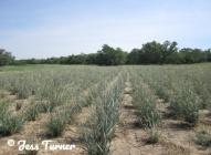parchedsoil