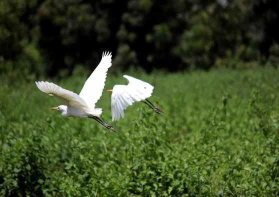 bird park river egret