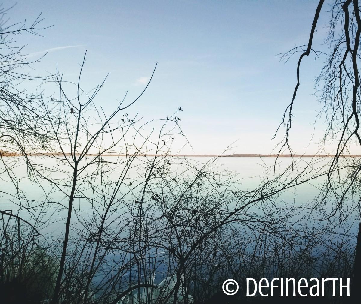 lake monona trees