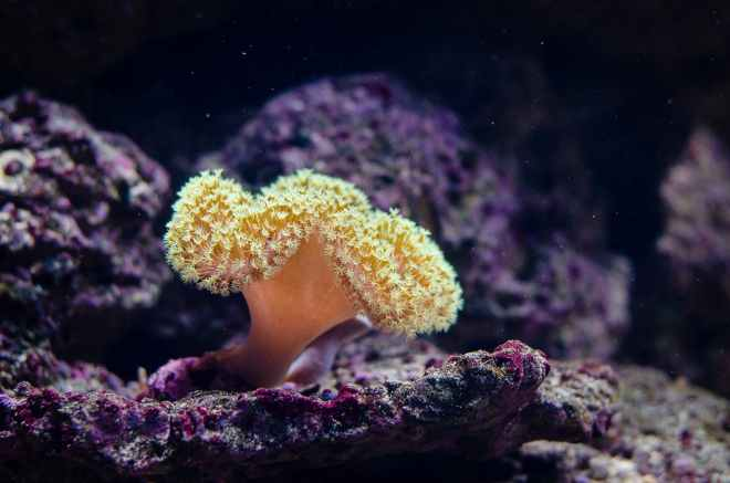 close up photography of coral reef