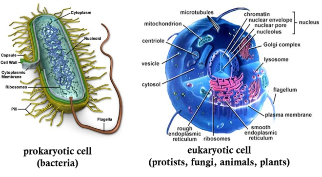 prokaryote_vs_eukaryote