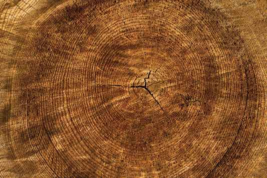 close up crack hardwood log