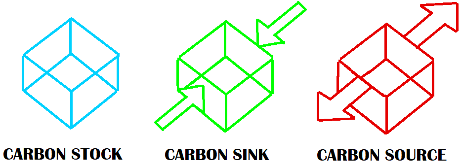 carbon source versus sink
