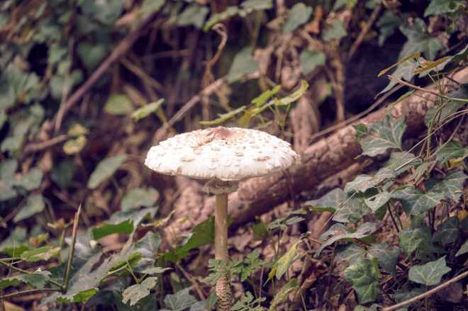 white mushroom surrounded with green leaves