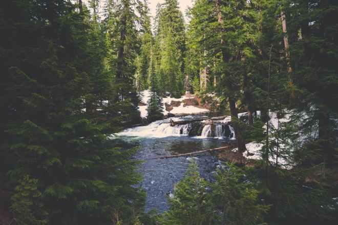 cascade cold conifers environment