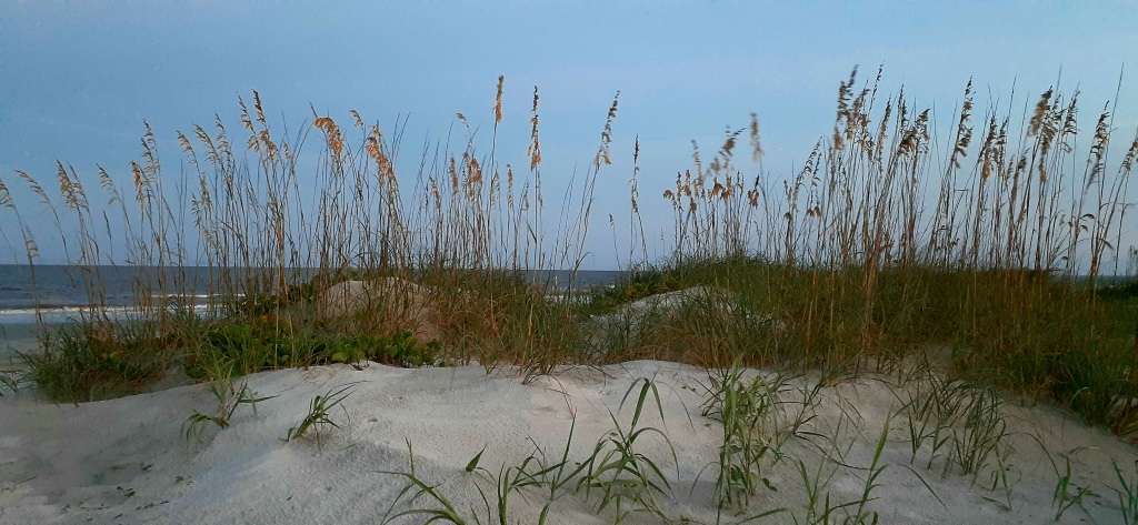 tall grasses in sand with ocean in background